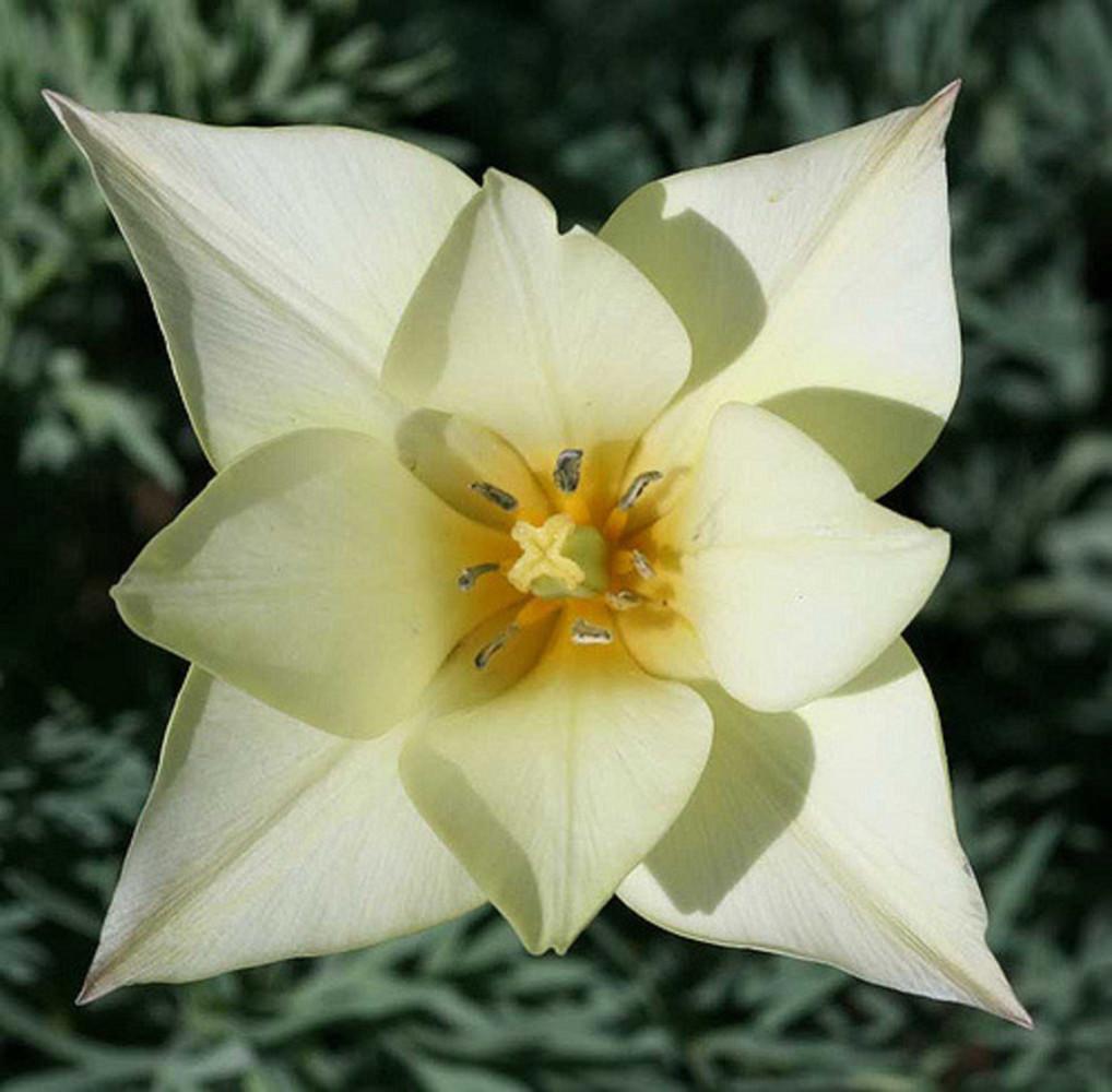 Flowerinspo.thumb