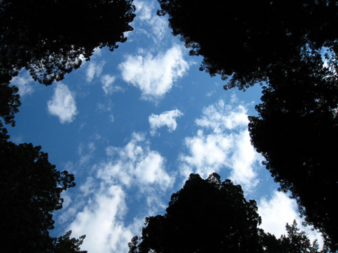 Negative trees.thumb